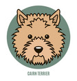 portrait of cairn terrier vector image vector image