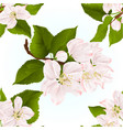 seamless texture apple blossom twigs with leaves vector image vector image