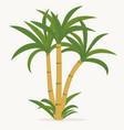 sugar cane cane plant sugarcane harvest stalk vector image vector image