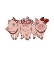 three cheerful elegant pigs fashionista vector image vector image