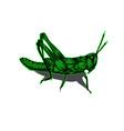 simple design grasshopper vector image vector image