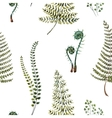 Watercolor fern pattern vector image