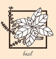 hand drawn basil vector image