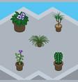 isometric houseplant set of flower flowerpot vector image