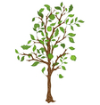 Single tree with leaves vector image