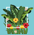 square freme with flowers and leaves plants vector image vector image