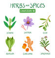 Herbs and spices collection 15 vector image vector image