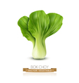 Pok Choy isolated on white background vector image vector image