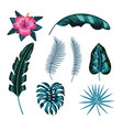 set natural flower and tropical leaves vector image vector image