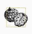 sugar-apple hand drawn vector image vector image