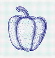 bell pepper hand drawn sketch vector image vector image