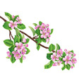 flowering branch one vector image vector image
