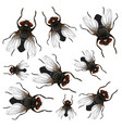 many fly on white background vector image