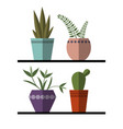 plants and cactus in pots set vector image vector image