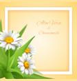 chamomile aloe flowers background vector image
