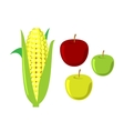 Corn cobs on white background set vector image vector image
