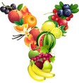 letter y composed different fruits with leaves vector image