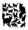 orange somali cat animal silhouettes vector image vector image