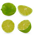 realistic whole lime and half a lime vector image vector image