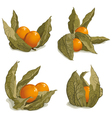 set of ripe physalis vector image vector image