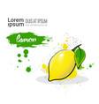 lemon hand drawn watercolor fruit on white vector image