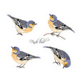 finch bird set vector image