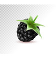 quality realistic isolated berry one vector image vector image