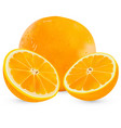 set realistic whole orange and half orange vector image