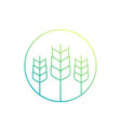 wheat agriculture icon vector image vector image
