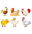 A rooster hen and duckling vector | Price: 1 Credit (USD $1)