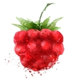 Berry logo design template Raspberry or vector image vector image