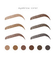 eyebrow color vector image vector image