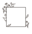 hand drawn camomile flower sketch vintage style vector image