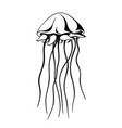 jellyfish ink hand drawn vector image vector image