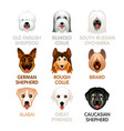 cute dog icons - set iv vector image vector image