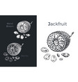 hand drawn jackfruit icons vector image vector image