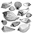 set of different sea shells hand drawn vector image