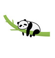 panda sleep on tree isolated whitepanda cartoon vector image
