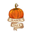 season sale ribbon with pumpkin vector image vector image