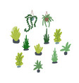 Houseplants set succulents