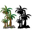 palm tree and its silhouette on white background vector image