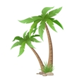 two palms tree isolated vector image vector image