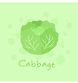 Vegetable Cabbage Nature vector image vector image