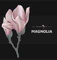 vintage pink magnolia flowers for decoration card vector image