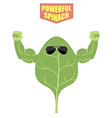 powerful spinach A strong plant with big muscles vector image vector image