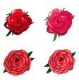 A rose flower vector image vector image