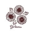 Handsketched bouquet of gerberas vector image vector image