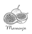 maracuja passion fruit vector image vector image