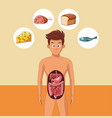 young man digestive system vector image