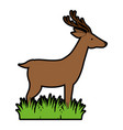 wild deer isolated icon vector image vector image